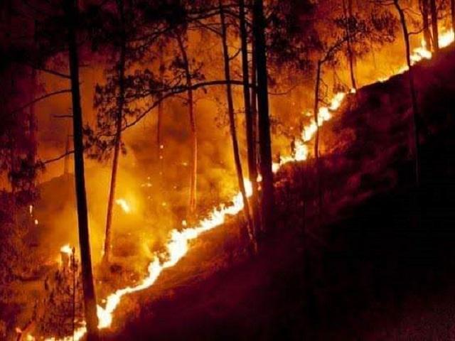 Forest fire uttarakhand