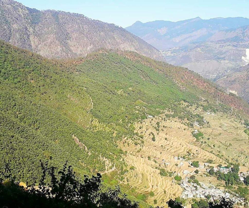 Uttarakhand forest